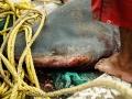 026-rybolov-zralokov-oman
